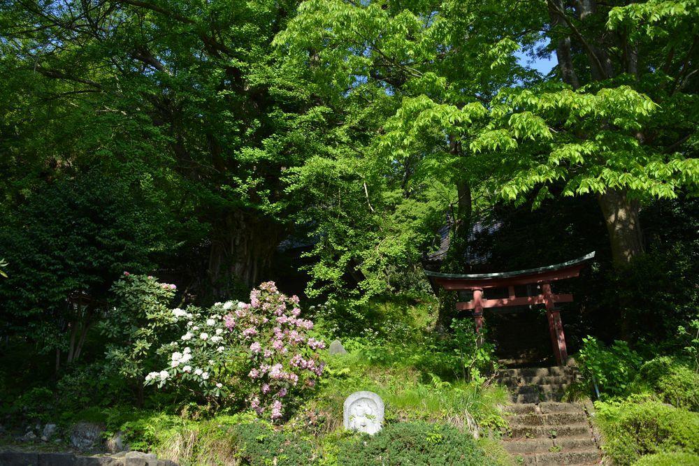新緑の西生寺-3