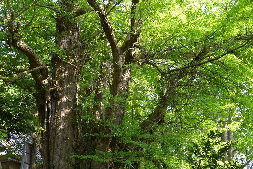 新緑の西生寺-4