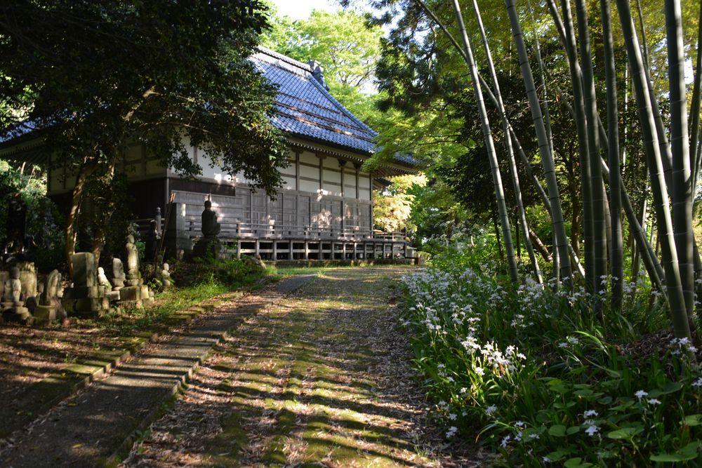 新緑の西生寺-7