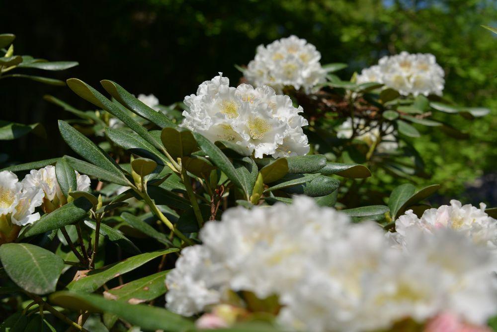 西生寺 春の花-1