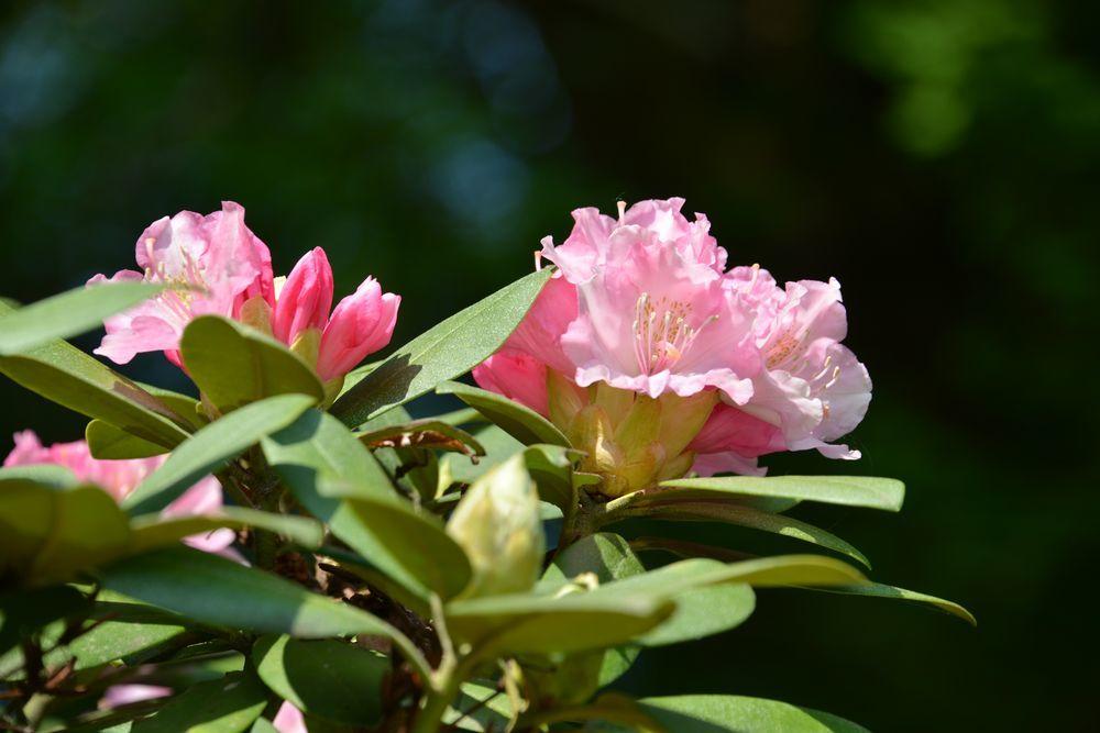 西生寺 春の花-2