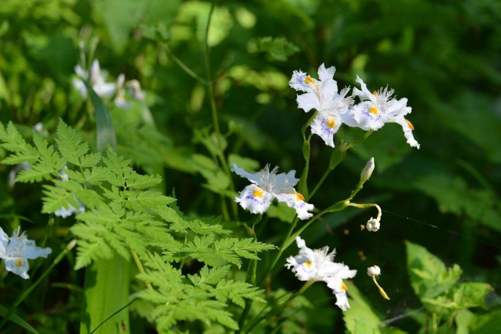 西生寺 春の花-3