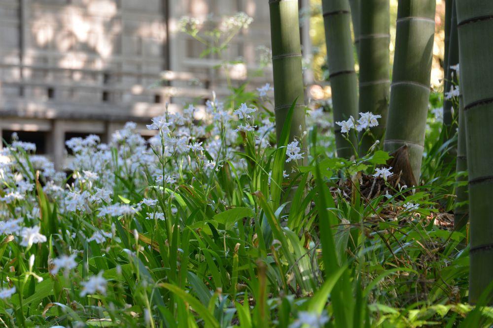 西生寺 春の花-5
