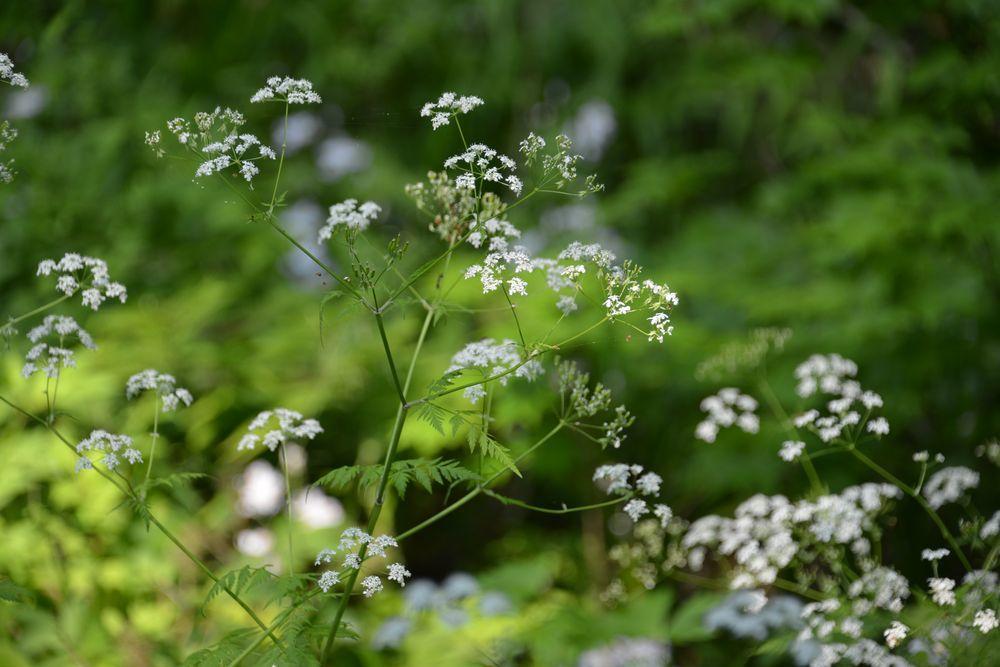 西生寺 春の花-6