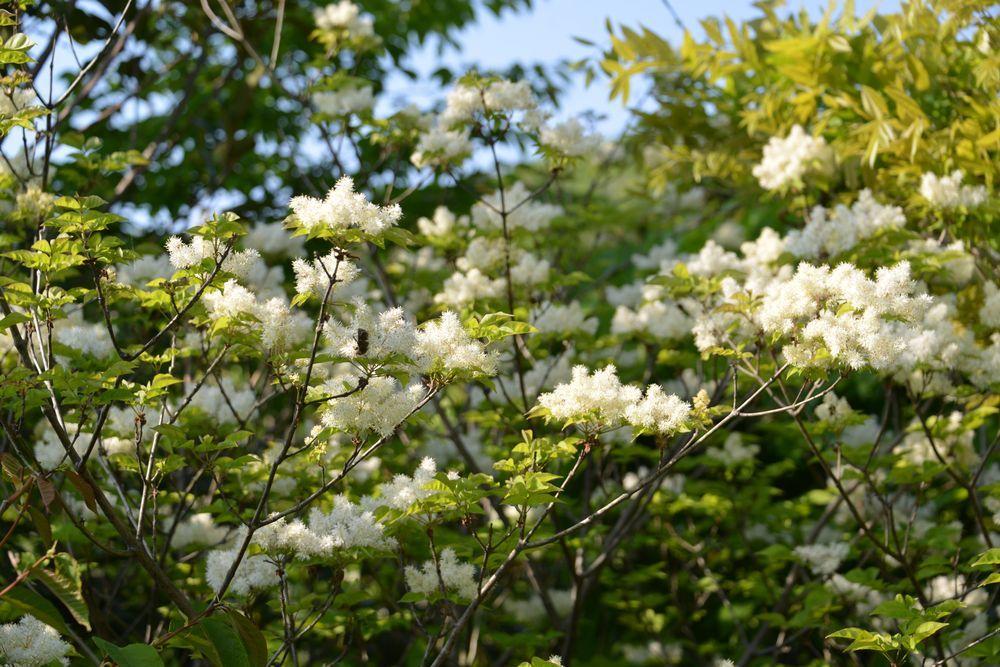 西生寺 春の花-7