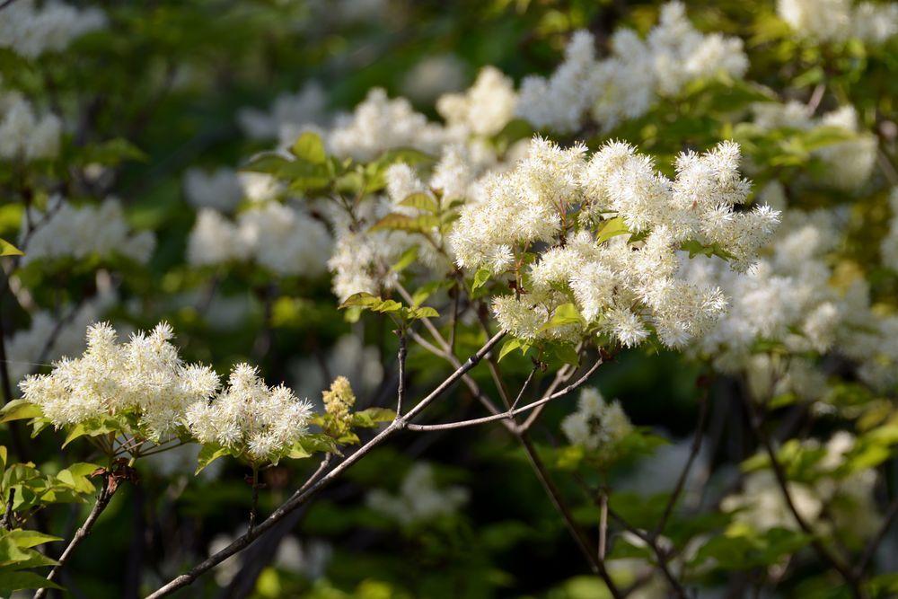 西生寺 春の花-8