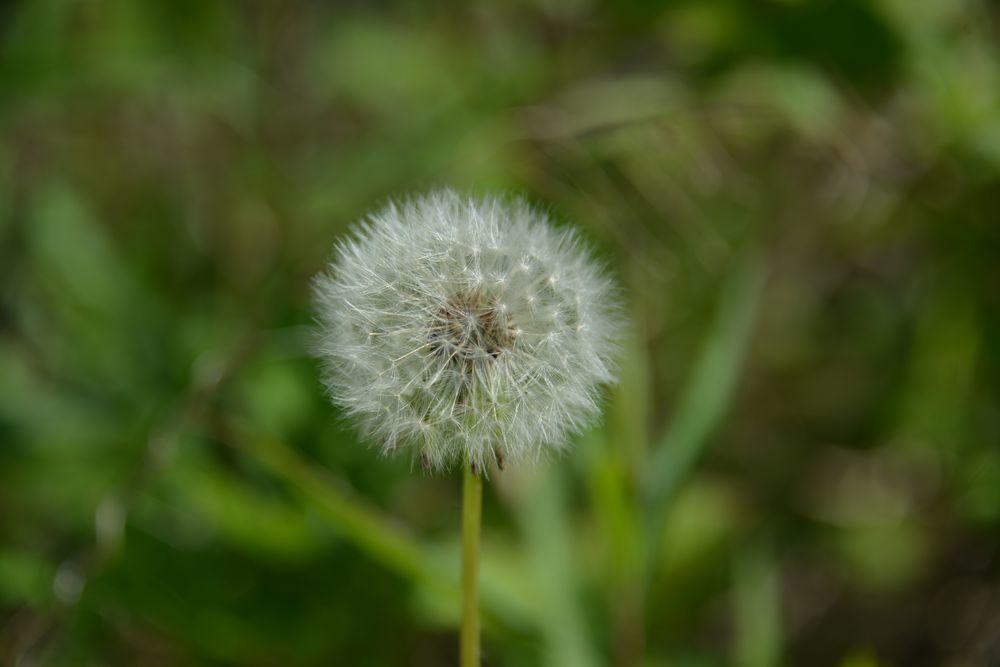 弥彦の春の花たち-9
