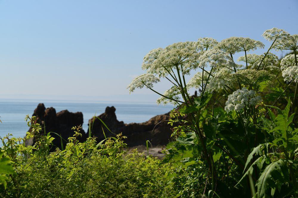 海岸に咲く-1