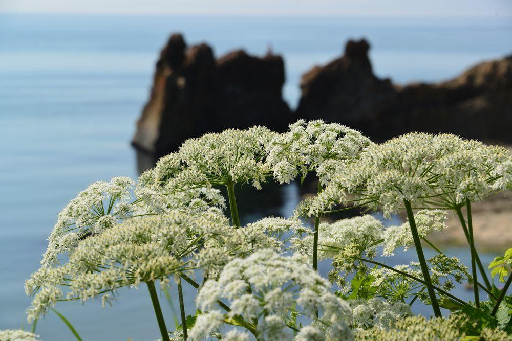 海岸に咲く-3