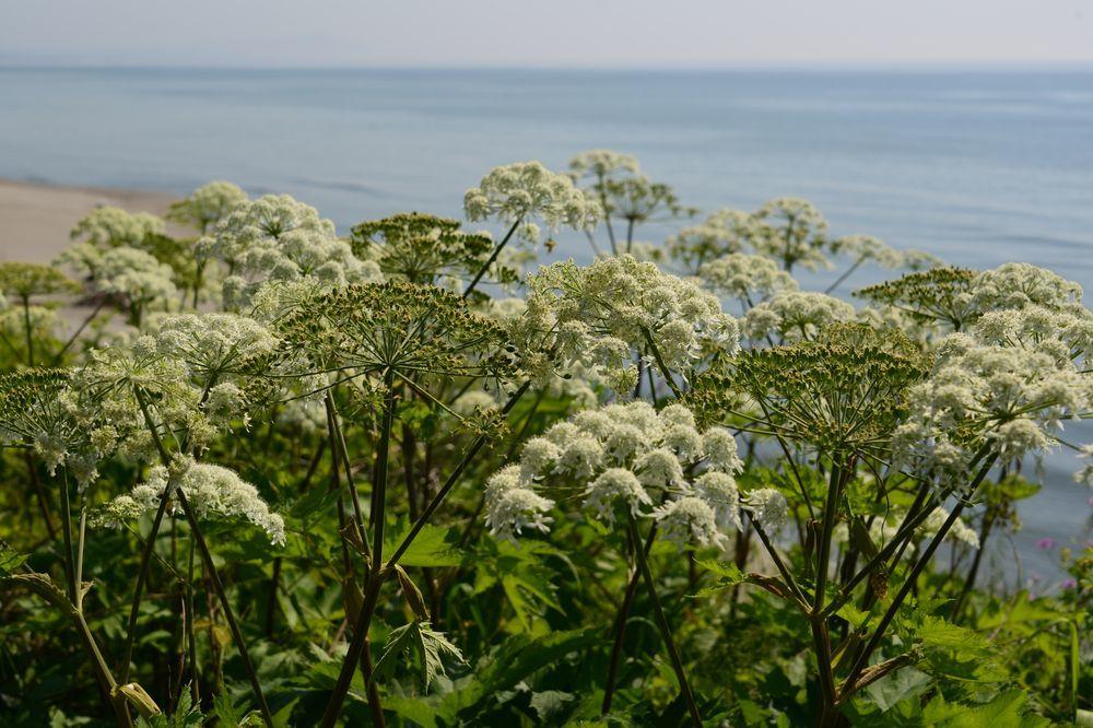 海岸に咲く-4