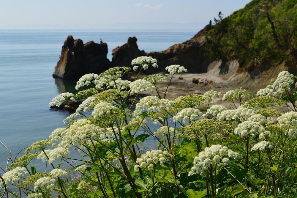 海岸に咲く-2