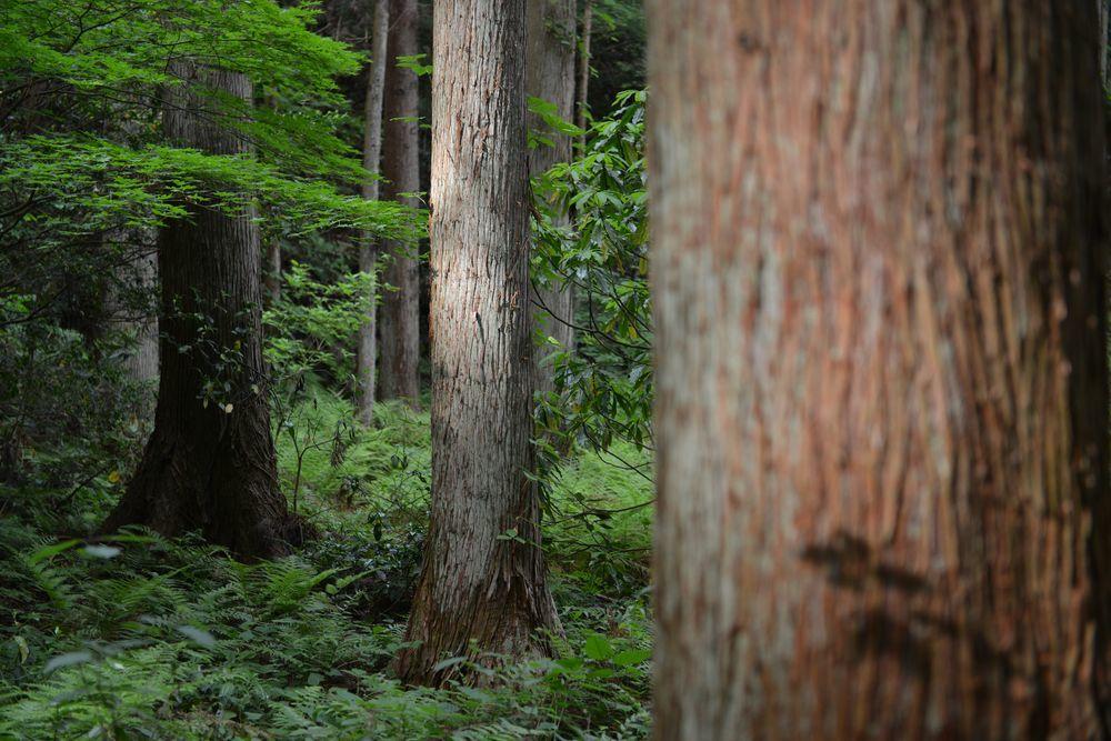 婆々杉近く―2