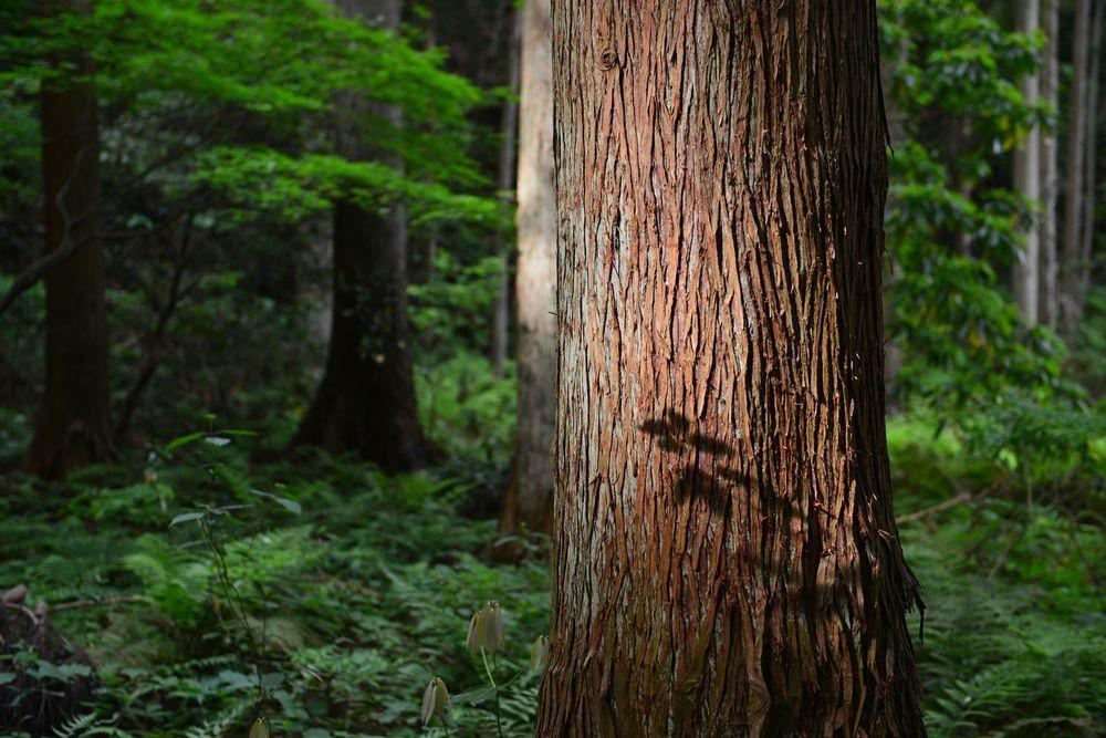 婆々杉近く-3