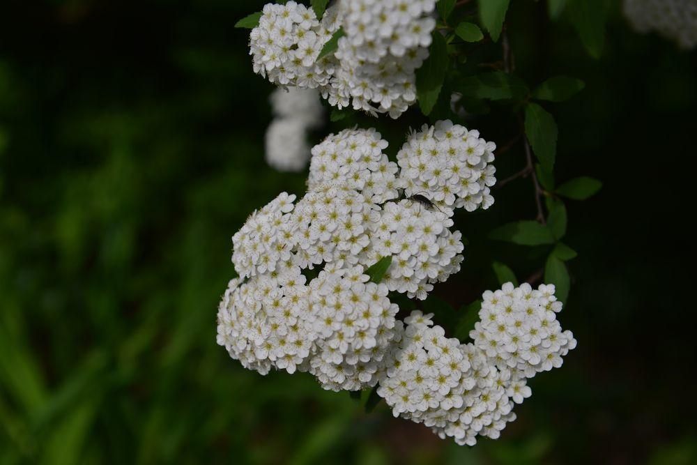 白い花たち-2