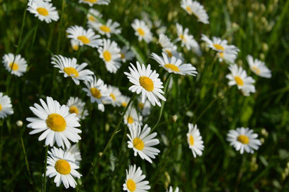 白い花たち-5