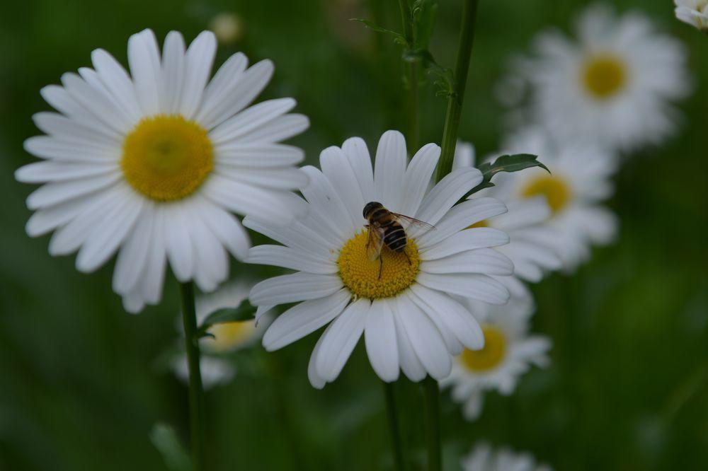 白い花たち-4