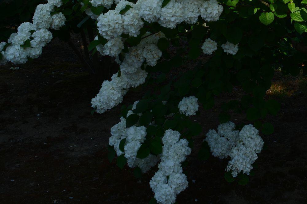 白い花たち-7