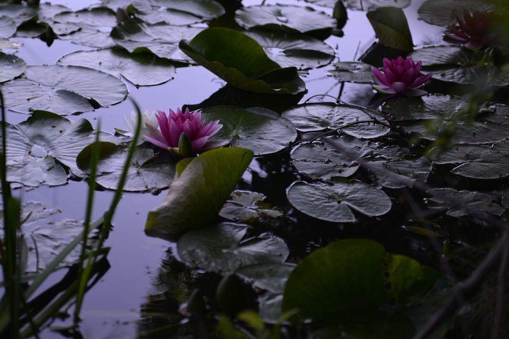 仁箇堤の花たち-2