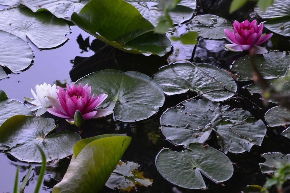 仁箇堤の花たち-3
