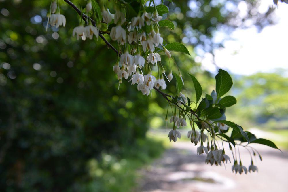 仁箇堤の花たち-4