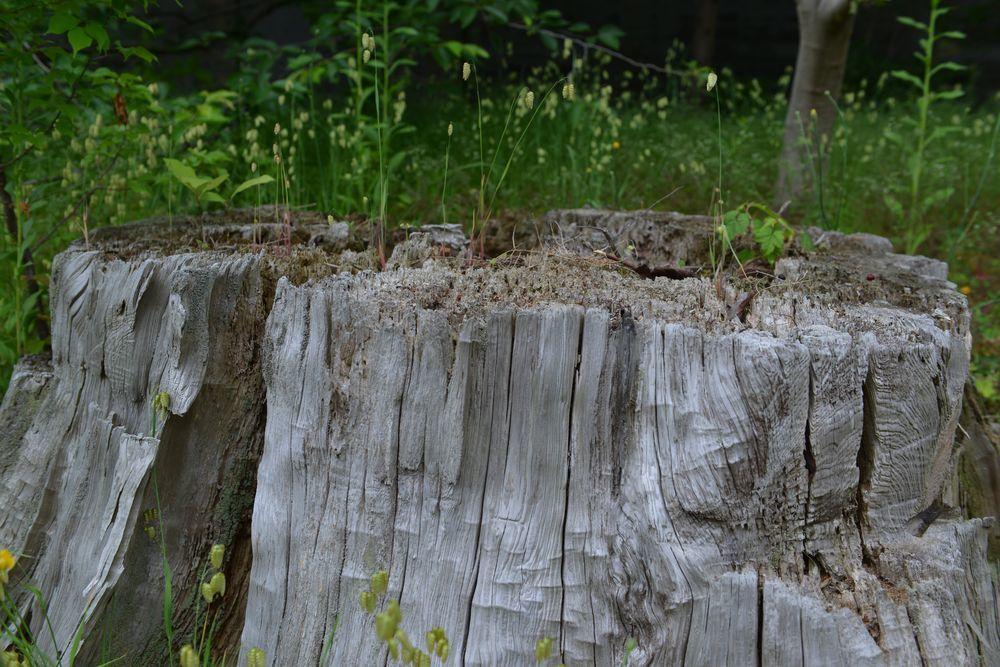 杉並木の下に-4
