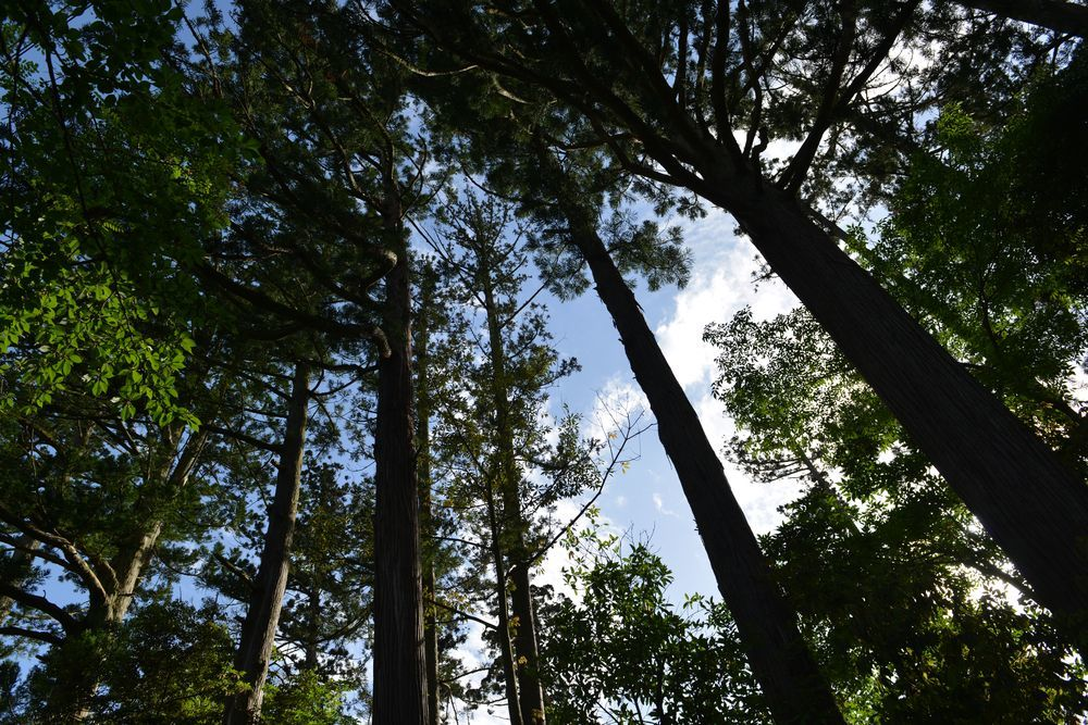 杉並木の下に-6