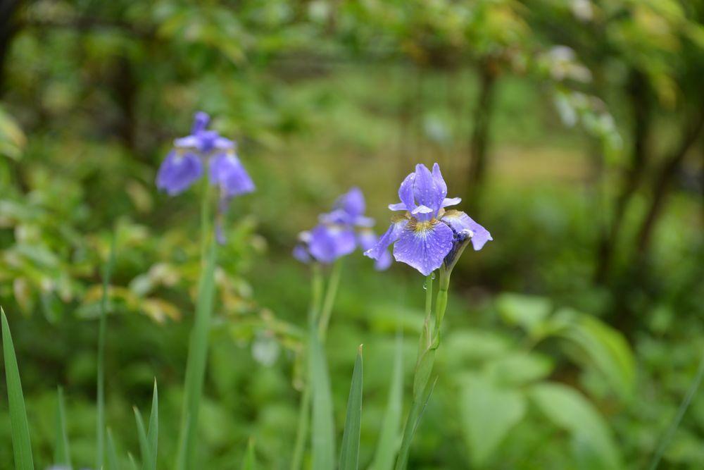 雨上がりの花-2