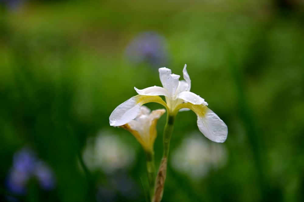 雨上がりの花-3