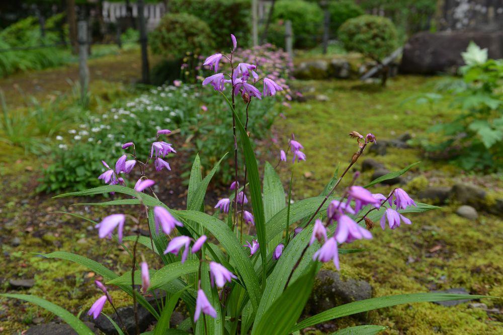 雨上がりの花-4