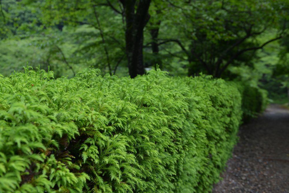 雨上がりの緑-2