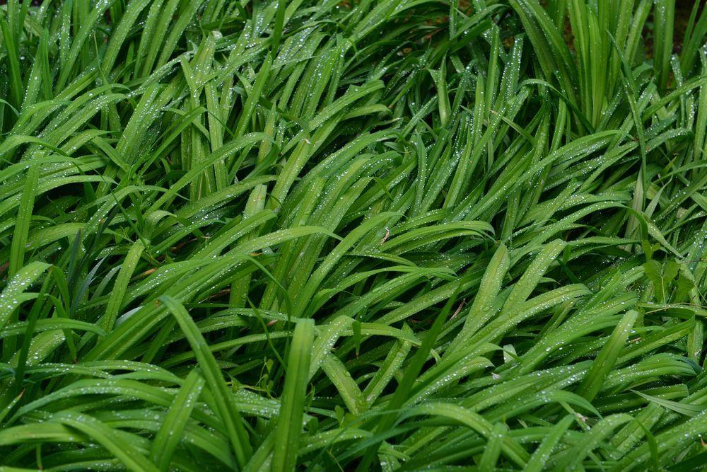 雨上がりの緑-4