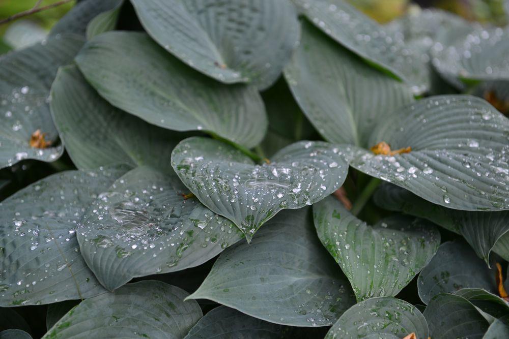 雨上がりの緑-7