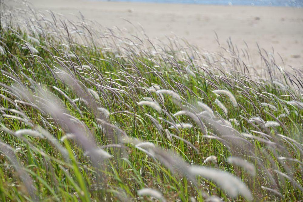 浜に咲く-4