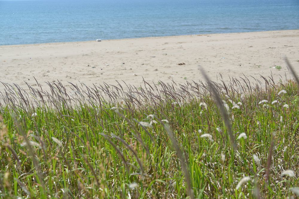 浜に咲く-5