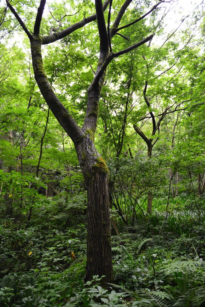 林の中-5