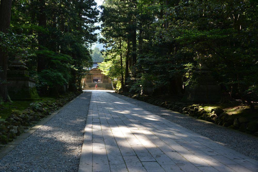 神社 木漏れ日-3
