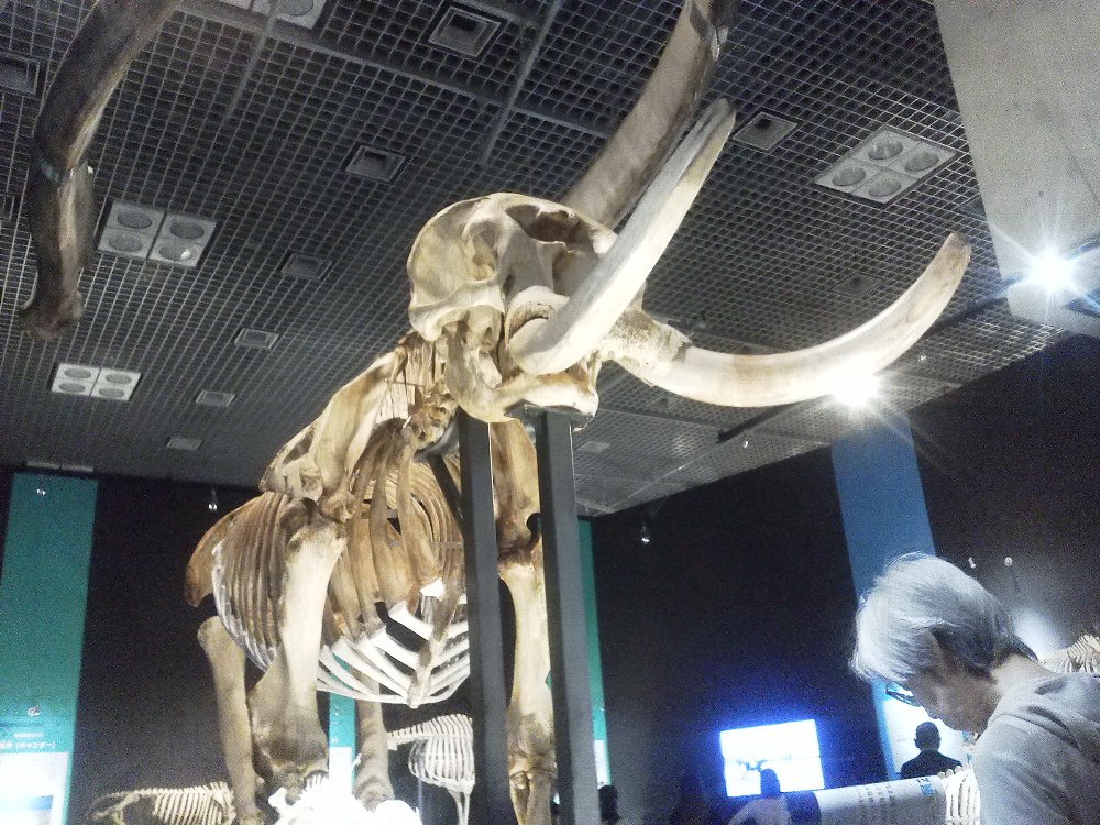 F1000129国立科学博物館4月19日大哺乳類展
