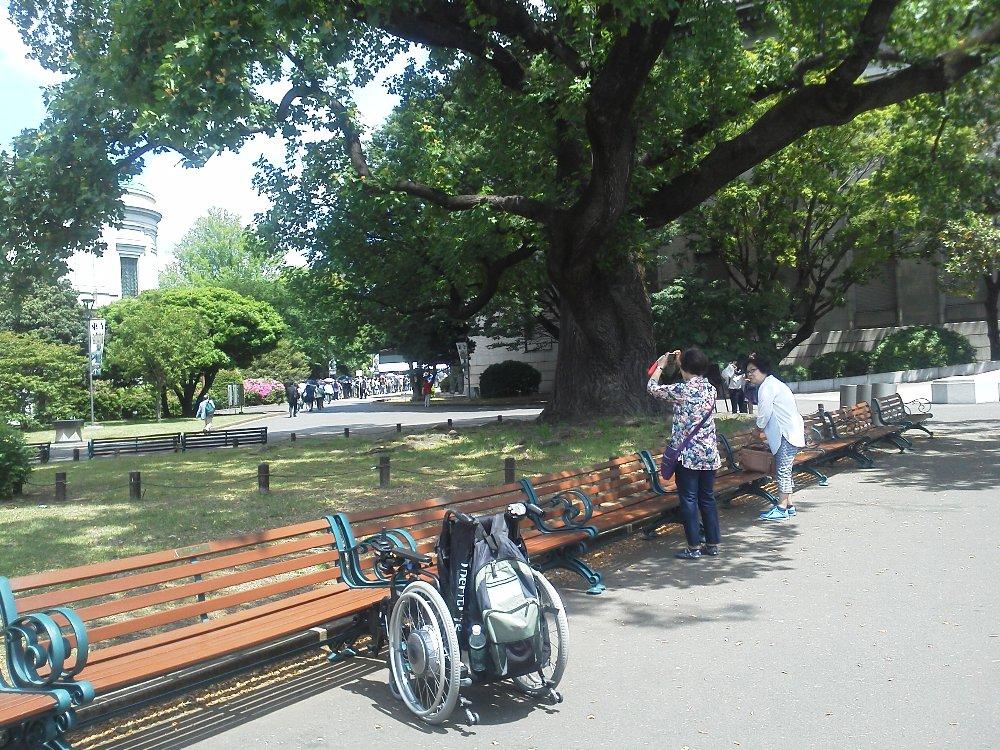 F1000358東京国立博物館5月17日ユリノキと車いす