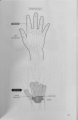 大きな手と小さな手