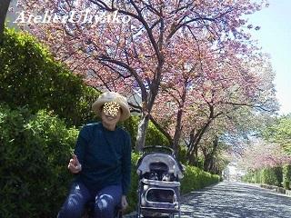 190418桜並木散歩2回目ママとワンコ