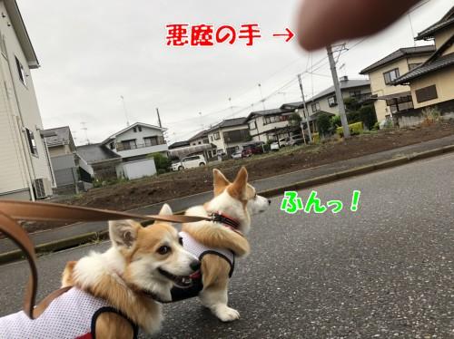 IMG_7051a.jpg
