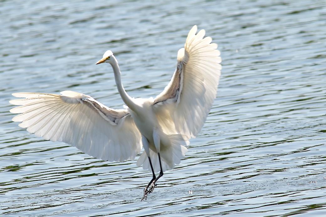 その他の鳥さんの飛翔シーン_2