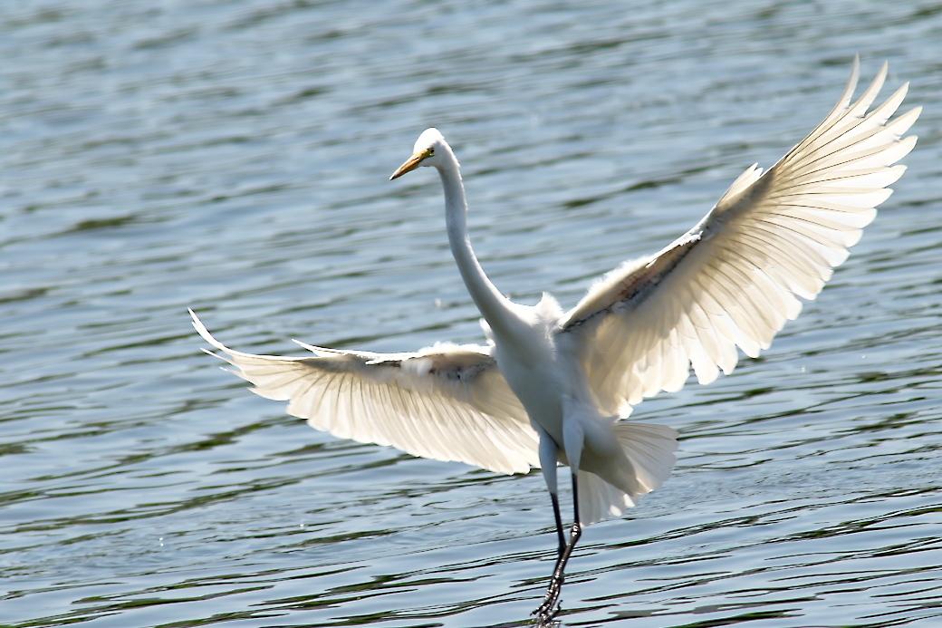 その他の鳥さんの飛翔シーン_3
