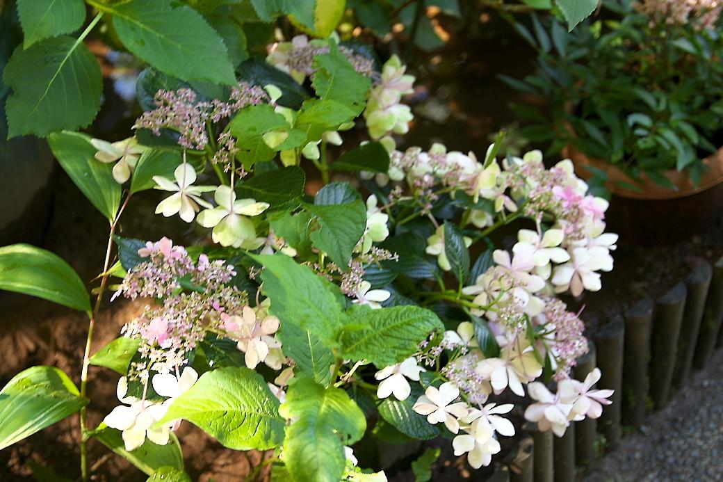 小さな花壇_2
