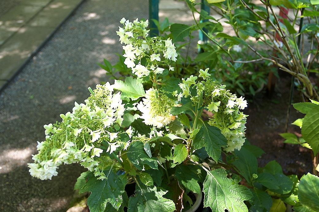 小さな花壇_3