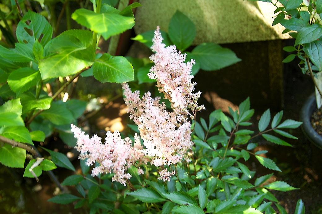 小さな花壇_4