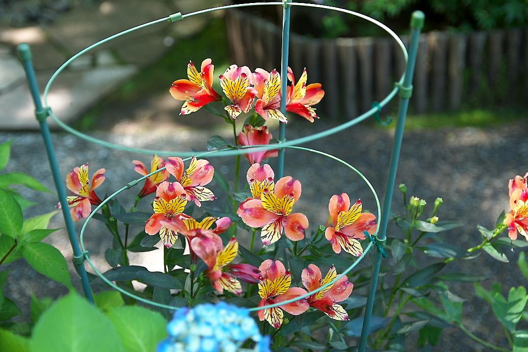 小さな花壇_6