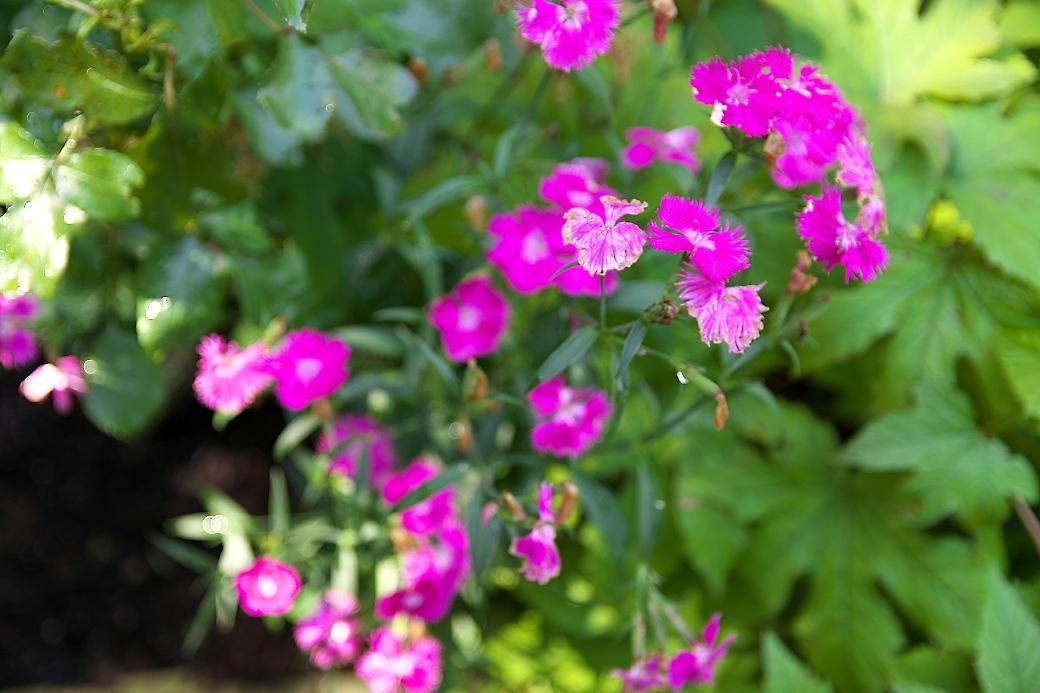 小さな花壇_7