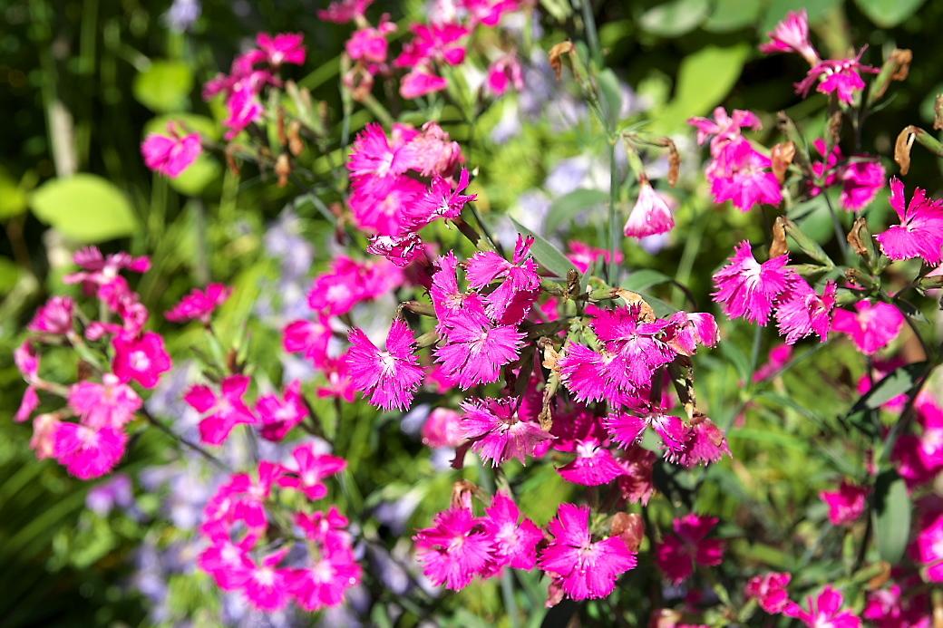小さな花壇_8