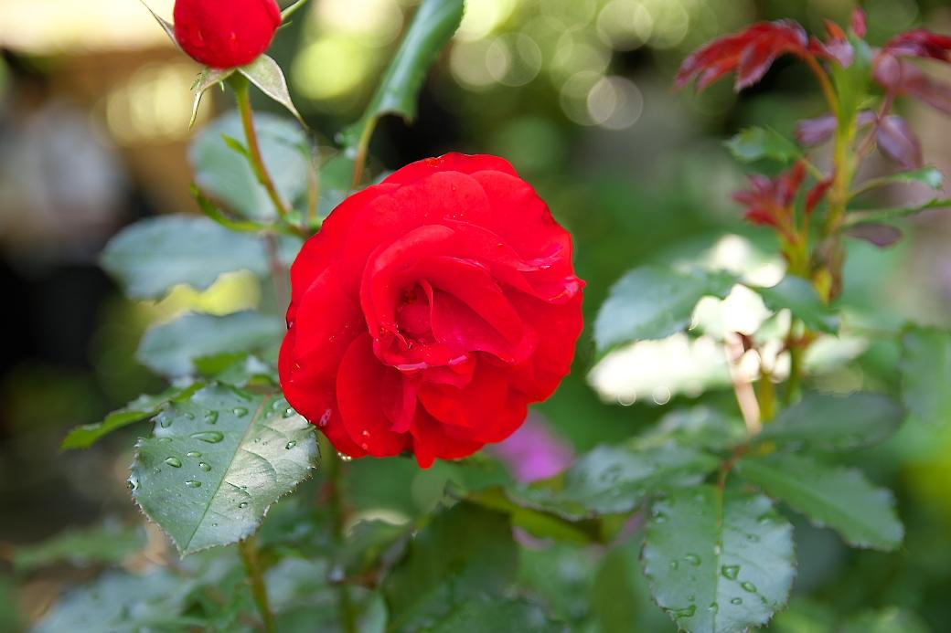 小さな花壇_10